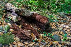 Putrefaccin (yeray.ventura) Tags: bosque cedro paisaje naturaleza agua rio riachuelo corriente suelo