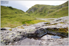 Ichthyosaura alpestris (Alessandro Laporta Photographer) Tags: ichthyosauraalpestris alpinenewt bergmolch tritonalpestre planinskipupek  planinskivodenjak  tritalp tritone alpino alessandrolaporta laportaalessandro laporta fotocesco alessandrolaportaphotographer alessandrolaportaphotography