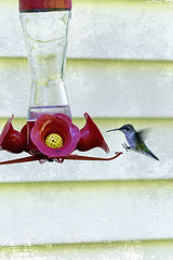 Landing Gear, 2016.08.23 (Aaron Glenn Campbell) Tags: siding home birdfeeder hummingbird grunge texturelayer firehouseroad lehman backmountain luzernecounty nepa pennsylvania neighborhood neighbor morning rural country sony a6000 ilce6000 a6k mirrorless fe70200mmf4goss emount relatives family