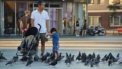 Duiven Voederen (josbert.lonnee) Tags: duiven pigeons feeding voederen voeren child kind kindje kinderwagen vaderenzoon fatherandson plein square outdoor mensen people pram