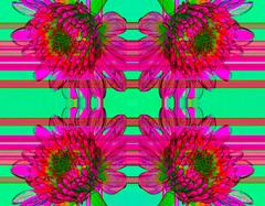 Kaleidoscopic Floral 5.0 (Ursa Davis) Tags: art artist artwork creative davis decor digital eclectic fine for home mix modern photo photographer photography purchase sale ursa ursadavis wwwursadaviscom