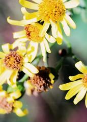 """Pastel Dreams"" (richardworkman22) Tags: pastel colours dreams garden countryside woods"
