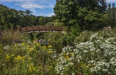 Footbridge and Fall Flowers (Janet's View2012) Tags: garden ohio toledobotanicalgardens toledoohio flowers gardens footbridge stream fall