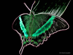Electric_Butterfly-01 (jamesclinich) Tags: olympus omd em10 jamesclinich corel paintshoppro topaz denoise adjust clarity detail glow handheld availablelight butterfly lubbock lubbocktx texas tx insects sciencespectrum