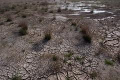 mud cracking at Hverir (nervous system) Tags: hverir geothermal iceland myvatn northeast is crackingpatterns crackedmud cracking cracks