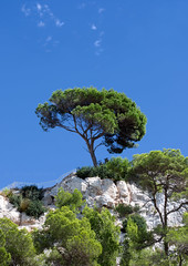 Standing Tall (Ali -1963 catching up) Tags: menorca mediterranean blue tree clifftop htt