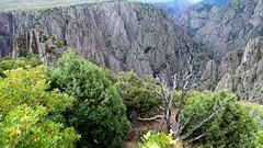 Black Canyon of the Gunnison National Park (lhboudreau) Tags: outdoors outdoor landscape landscapes southrim colorado usa rimdrive rimdriveroad blackcanyon gunnison blackcanyonofthegunnison westerncolorado park nationalpark blackcanyonofthegunnisonnationalpark canyon canyons stone cliff cliffs rock rocks chasm crag blackrock blackrocks plant plants green greenery rockformation rockformations gorge