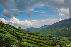 DSC_0084 (Dinesh Parate) Tags: scenic beauty landscape teaplantation hill station sky blue greenery mountains nature