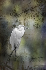 Egret (Artypixall) Tags: california bird texture san diego egret faa