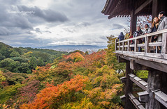 Standing on the Kiyomizu-dera in the Autumn Rain, Kyoto, Japan (onephotoeveryday) Tags: japan kyoto      kiyomizudera        dsc3712jpg nikond3sjapan