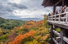 Standing on the Kiyomizu-dera in the Autumn Rain, Kyoto, Japan (onephotoeveryday) Tags: japan kyoto 京都 寺院 秋 寺 清水寺 kiyomizudera 秋天 楓紅 楓 雨 古寺 雨中 秋雨 dsc3712jpg nikond3sjapan
