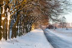 De Hoge Veluwe (TIF Fotografie) Tags: park nature landscape arnhem nederland bos landschap hogeveluwe nationaalpark stuifzand natuurenlandschap ingridfotografie