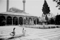 ducks in front of old ottoman mosque, tekkiye suleymaniye, damascus. (mysa kh) Tags: old blackandwhite bw birds columns ducks mosque arab syria ottoman handicrafts damascus oldcity masjid sham suleymaniye