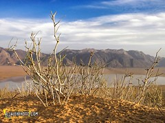 The Beauty of the Desert. (MOHAMMED AL-SALEH) Tags: plants mountain plant mountains nature desert deserts  naturephotography planetearth desertplant desertplants          mountainsinthedesert  uploaded:by=flickrmobile flickriosapp:filter=nofilter   ~