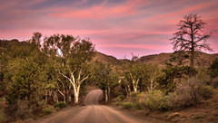 Flinders Ranges - Parachilna Gorge South Australia Outback (Jacqui Barker Photography) Tags: trees sunset backlight south australia ranges outback dirtroad southaustralia flinders flindersranges windingroad outbacksunset australiaoutback abcopen:project=yourbest