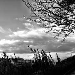 on my way to the train taking me to work (SS) Tags: camera city winter light sky bw italy white tree monochrome weather clouds composition buildings square tivoli day angle pov walk branches 4 year perspective scenic framing bianco dynamism lazio iphone pendolare 2013
