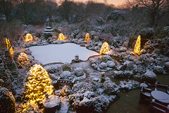 First winter snow in the upper garden (Jan 14) (Four Seasons Garden) Tags: fourseasonsgarden