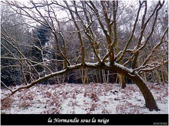 arbre / tree (pontfire) Tags: wood snow france tree ice forest lands