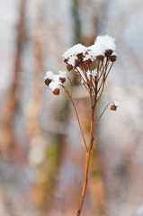 Sitting on (Kristin Sig) Tags: nature bokeh str snjrsnow sittingstraw