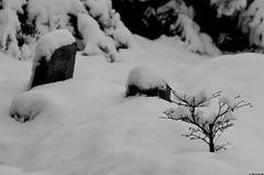 Hiver (Le No) Tags: neige 31 jardinjaponais hautegaronne midipyrnes stlon lauragais