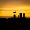 Summer Memory II (SteinaMatt) Tags: orange sun bird nature silhouette yellow matt iceland south ísland steinunn suðurland fuglar sólsetur steina skuggamynd dýralíf matthíasdóttir