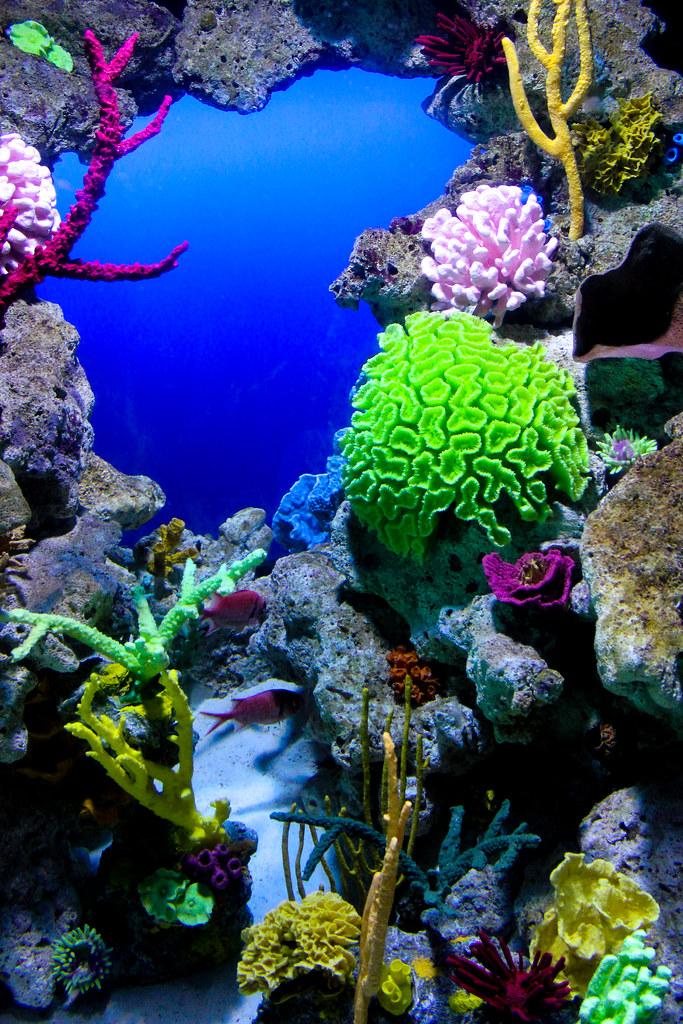 Aquarium - Atlantis - Paradise Island, Bahamas