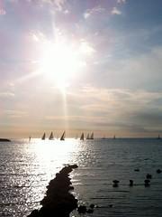 Yachts at Sunset (David Wolfram) Tags: sunset summer cloud beach coast seaside yacht blackswan contrejour brightonvictoria