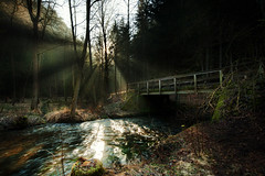 the bridge in the wood (Rainer Schund) Tags: wood bridge light nature forest licht nikon foto nebel live natur forgotten morgen lightrays morgens lichterfest lichtstrahlen lichtstimmung nikond700 naturemasterclass natureexploring