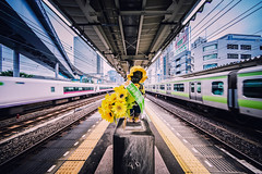 Day 204/366 : 7/29 JR Hamamatsucho Station (hidesax) Tags: day 204366 729 jrhamamatsuchostation  sunflower trains railroad roof monorail  tokyo japan hidesax sony a7ii voigtlander 10mm f56 366project2016 366project 365project
