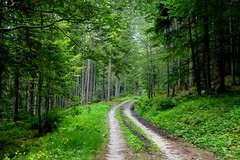 The path in the forest (annalisabianchetti) Tags: path sentiero forest bosco woods trees green verde mountains montagne