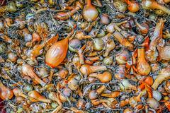 Onion (allejandrine) Tags: nature harvest collection onion stillife orange