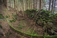 Remnant of Old North Road, Craigower, Pitlochry (Gordon Haws) Tags: perthkinross highlands perthshire pitlochry scottishsummer beautifulscotland centralhighlands tummelvalley lochsandglens oldnorthroad craigower craiglunie plantation forest pineforest