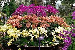 Orchid Extravaganza (chooyutshing) Tags: flowers orchids orchidextravaganza floraldisplay gardensbythebay baysouth marinabay singapore
