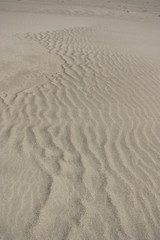 sand texture 1 (lisafree54) Tags: sand beach shore tan wavy curves curved curving pattern texture background nature free freephotos cco