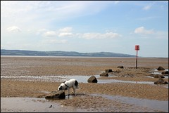 West Kirby Wirral  230816 (3) (over 4 million views thank you) Tags: westkirby wirral lizcallan lizcallanphotography sea seaside beach sand sandy boats water islands people ben bordercollie dog beaches reflections canoes rocks causeway yachts outside landscape seascape