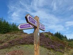 John Muir Way signpost, Bannachra Muir, near Helensburgh (luckypenguin) Tags: scotland lochlomond helensburgh balloch johnmuirway waymarker signpost heather