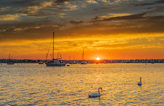 Christchurch Harbour Sunrise (nicklucas2) Tags: seascape beachhut harbour sea seaside sun sunrise christchurch cloud cloudsstormssunsetssunrises bird swan