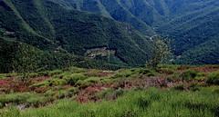 L o voyage le regard... (Et si, et si ...) Tags: montaigoual cvennes sud paysage nature randonne bruyre vgtation couleurs