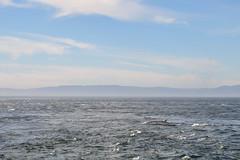 Au milieu du St-laurent (Nijule) Tags: blue canada water automne river landscape back nikon eau wave bleu qubec whale stlaurent paysage vague 2012 fleuve baleine d90 aileron rorqualcommun