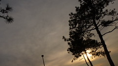 P1220049 (aprm718_3) Tags: nyc trees sunset sky brooklyn clouds campus landscape kingsborough amateurphotography anthonymcnallyphotography aprm718