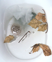 (Amber-Thomas) Tags: autumn water leaves hair toilet