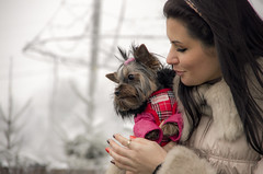 """my precious"" (wriggler!) Tags: show winter dog pet cold beauty fashion animal day little pentax exhibition parade precious pageant wriggler pentaxk5"