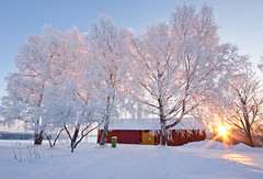 outside my door (Explored) (Andreas Hagman) Tags: pink blue trees winter sky sun white snow cold yellow backlight barn garden dawn countryside frozen frost sweden hoarfrost tripod nopeople explore flare birch garbagecan trashcan scandinavia sunrays redb
