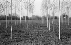 (giovanegian) Tags: morning autumn italy tree poplar tranquility calm silence modena absence orwonp22 selfdev tessar2850 werra1c prestorrvs750 expirednov1989 stcklertwobatha4b420c