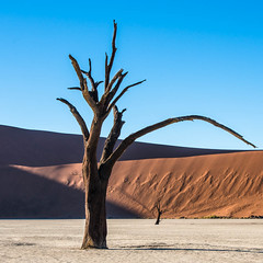 "Deadvlei Sossusvlei Namibia • <a style=""font-size:0.8em;"" href=""https://www.flickr.com/photos/21540187@N07/8292973945/"" target=""_blank"">View on Flickr</a>"