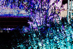 My Garden III (psychedelic world) Tags: flower art garden meadow wiese blumen psychedelic garten psychedelisch wohltorf psychedelicworld