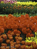 """Red, Orange and Yellow Tulip Beds • <a style=""""font-size:0.8em;"""" href=""""http://www.flickr.com/photos/44019124@N04/8311009358/"""" target=""""_blank"""">View on Flickr</a>"""