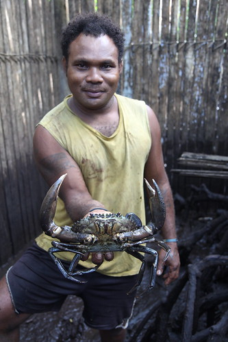 Mudcrabs are kept in an enclosure for fattening prior to market.  Malaita, Solomon Islands. Photo by Wade Fairley, 2012.