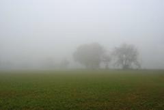 Nebbia in Campagna (Wrinzo) Tags: trees italy mist tree fog alberi countryside italia campagna nebbia albero marche piane cameratapicena