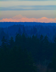 Mt. Baker At Sunset from Tumwater Hill (Paul T. Marsh/PositivePaul) Tags: trees winter sunset mountains olympia 2012 supertelephoto fujis3pro lightroom3 wwwpaulmphotographycom paulmarshphotography nikon400mmf35ais